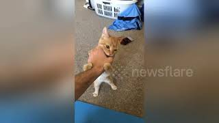 Jerk kitten clearly fails at giving high-five