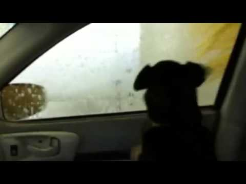 Dog barking @ the Car wash