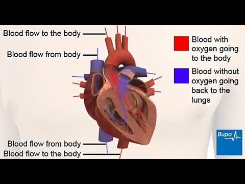 How your heart works - structure and function