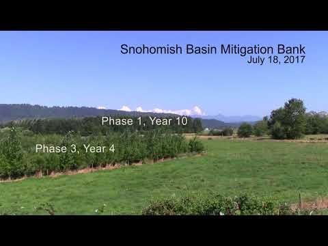 Snohomish Basin Wetland Mitigation Bank