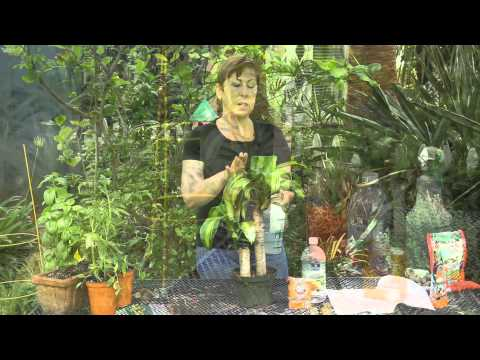 Natural Remedies for Houseplant Diseases : Garden Space