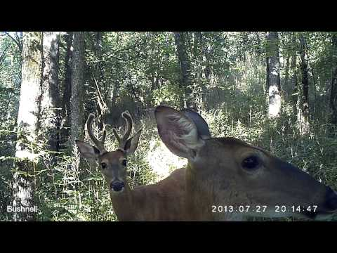 Three deer close-up