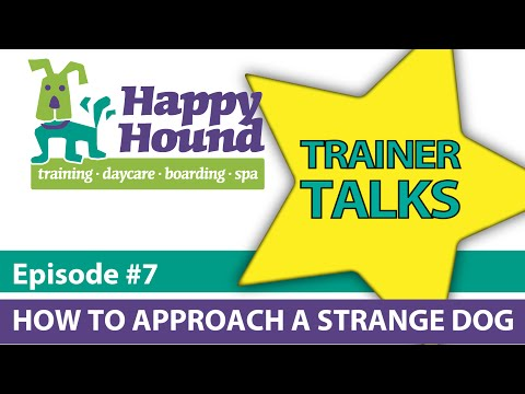 HHTV Trainer Talks: How To Approach a Strange Dog