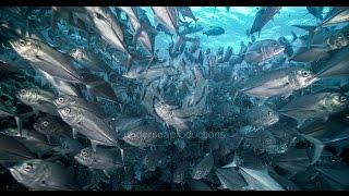 """4K UltraHD underwater nature video stock footage Demo Reel UHD """"Undersea Realm in 4K"""""""
