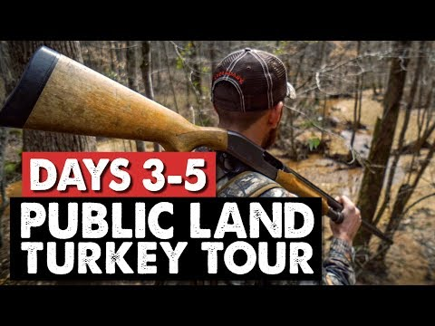 GOBBLING BIRDS! - Turkey Camp Cribs Style - Turkey Tour Day 3-5