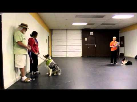 Therapy Dog Mock Test