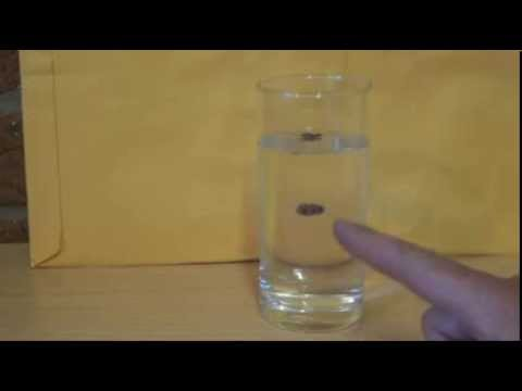 How to do the Dancing Raisins Trick - Raisins and Soft Drink - Simple Science Experiment