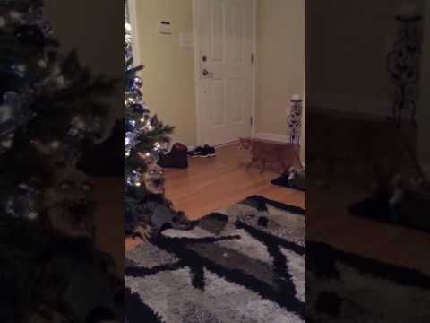 How to keep your cats away from Christmas trees