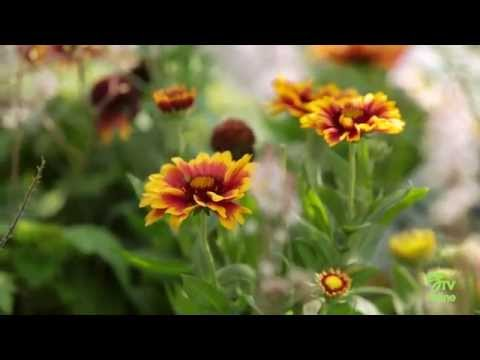 Flowering Pots - Great Tips for Keeping Them Beautiful