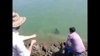 Samsun Çakmak Baraji Olta İle Sazan Avi 2