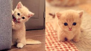 Baby Cats - Cute and Funny Cat Videos Compilation #26 | Aww Animals