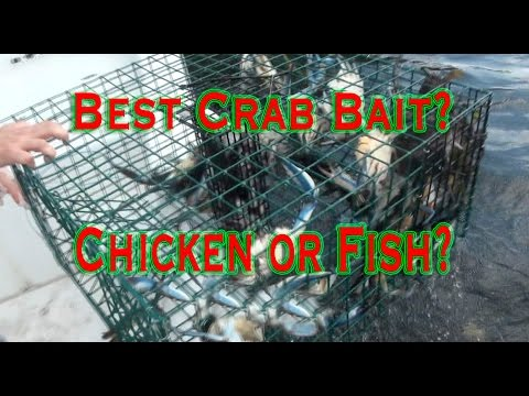 Catching Blue Claw Crabs: Chicken or fish for bait?