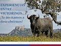 Así se embarcaron los Toros para la Corrida de la Prensa en Madrid