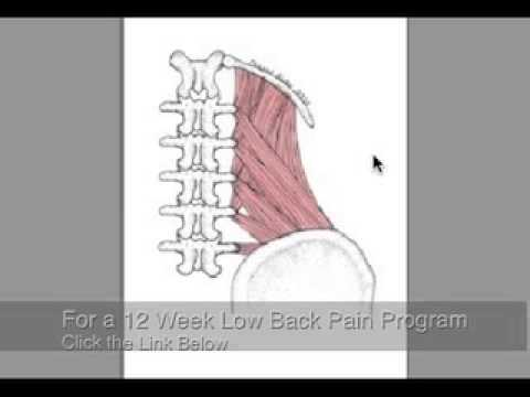 Reduce Low Back Pain, release tight muscles Part  1 of 2