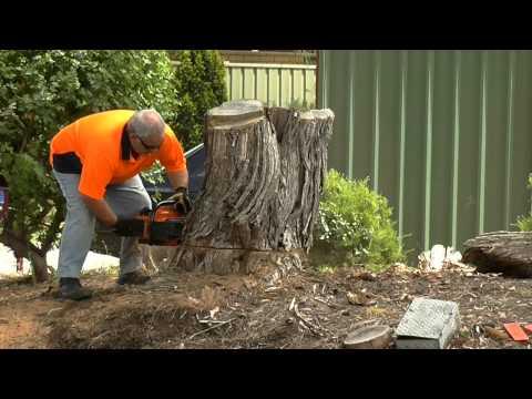 Oleo Mac 284 MPF chainsaw cutting a stump