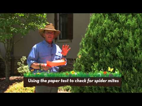 How to control Spider Mites
