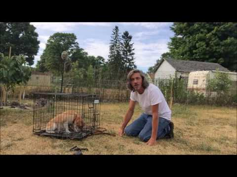 Why use a dog Crate...How to teach Puppy or Adult Kennel Command