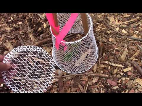 Protective Wire Cage for Seedlings