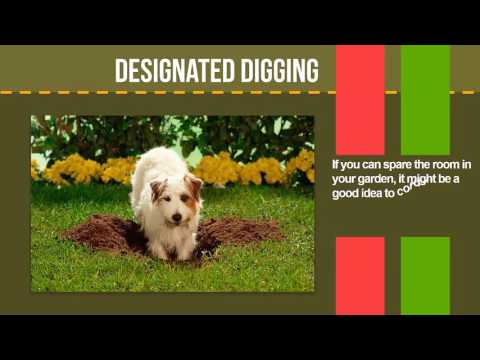 How to Stop a Dog from Digging: 10 fool proof tips