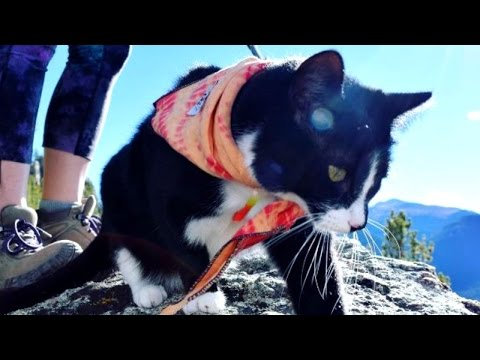 Tiny Kitten Loves Big Hikes In The Rocky Mountains With Her Owners
