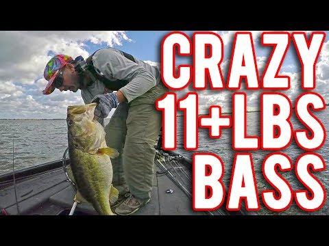 HUGE 11+lbs Bass Caught on Crazy Light Fishing Line