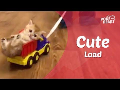 Kid Pulls Kitten Around In Toy Truck