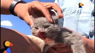 Kitten ABANDONED In Desert, Attacked by Birds Rescued By Nicest People | The Dodo