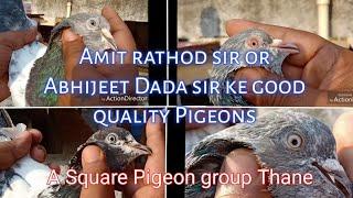 Amit rathod sir or Abhijeet Dada ke good quality Pigeons