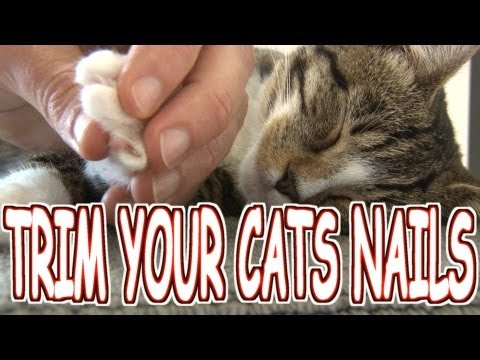How to trim/cut your cat's nails the HUMANE WAY - Tutorial