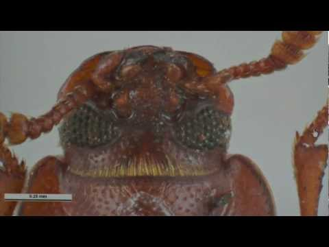 GCTV7: Overcoming Phosphine Resistant Insects
