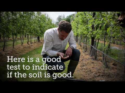 GREATsoils: improving soil health in orchards with James Smith, Loddington Farm