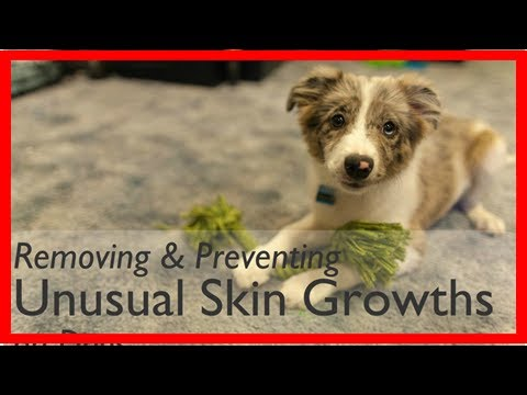 How to Remove and Prevent Skin Tags on Dogs