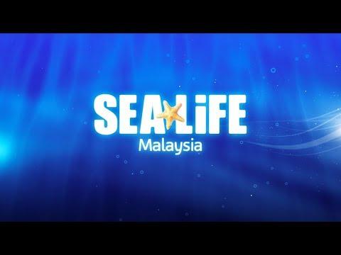SEA LIFE at LEGOLAND Malaysia Resort (Open Q4 2018)
