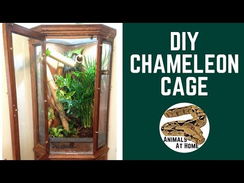 DIY Chameleon Cage- Vivarium