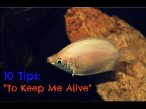 10 Tips To Keep Your Aquarium Fish Alive