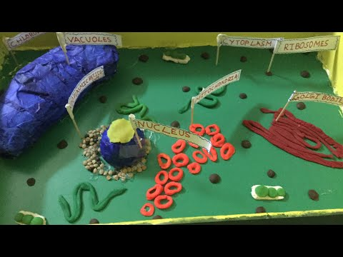 How to make a plant cell modal