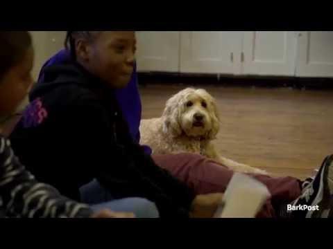 Dog Jobs: Dogs Teach Children Empathy, Prevent Bullying