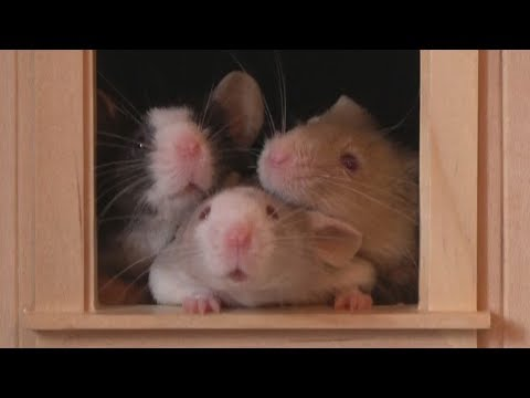 Three Little Boys - three very different personalities - cute little mice