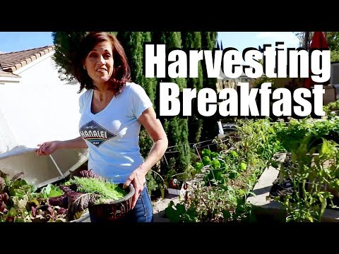 Harvesting Breakfast, Good Bye to a Friend,  Drew's New Job!  // A Day in the Life of CaliKim #8