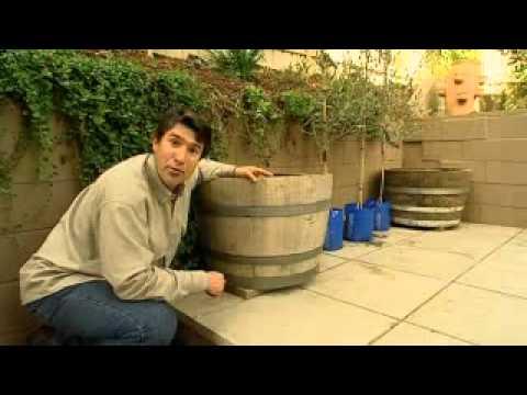 The Garden Gurus - Planting Up Wine Barrels