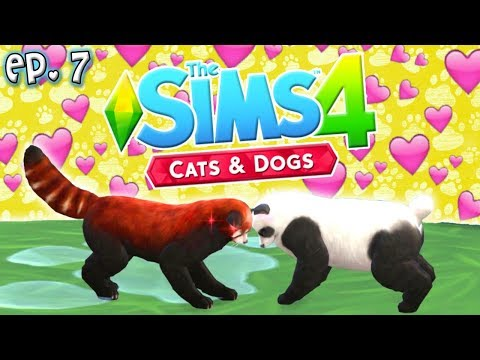 Panda Love - The Sims 4: Raising YouTubers PETS - Ep 7 (Cats & Dogs)