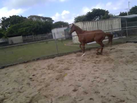horse getting hit by electric fence