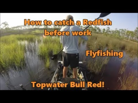 How to Catch a Redfish before Work- Bull Red on Topwater!!