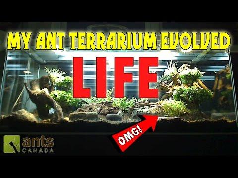 OMG! MY GIANT ANT TERRARIUM EVOLVED LIFE!