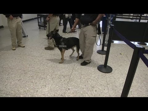 Oakland Airport's TSA gets helping paw from man's best friend