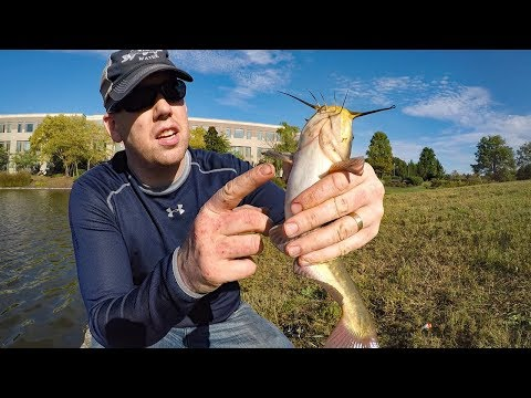 Pond Fishing for Bass Bullheads & Crappie - Fishing with shrimp and worms