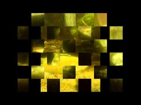Xxx Mp4 Komplett Video Xxx Mister T 3gp Sex