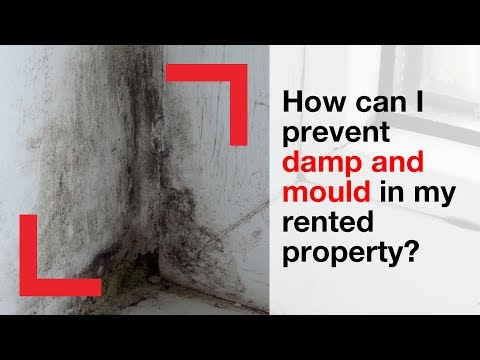 How can I prevent damp and mould in my rented property? | housing advice | Shelter