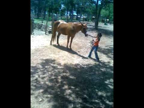 Devyn Horse Camp Part 3