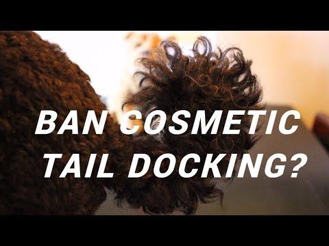 Ban Cosmetic Tail Docking?